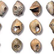 وجود جواهرات از زمان پیدایش انسان